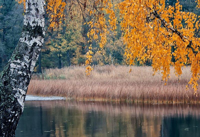 пейзаж,осень,озеро,парк Осень.photo preview