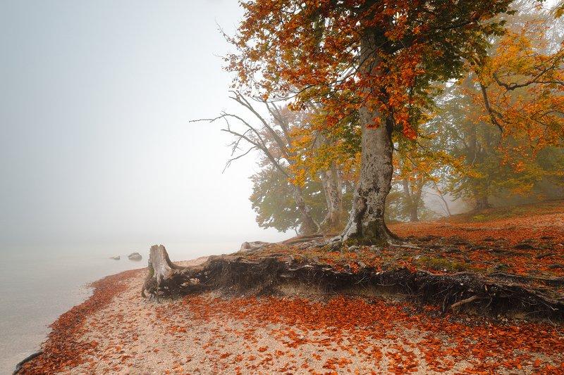 autumn, mood, fog, mist, morning, tree, leaf, lake, water, colour, Autumn structurephoto preview