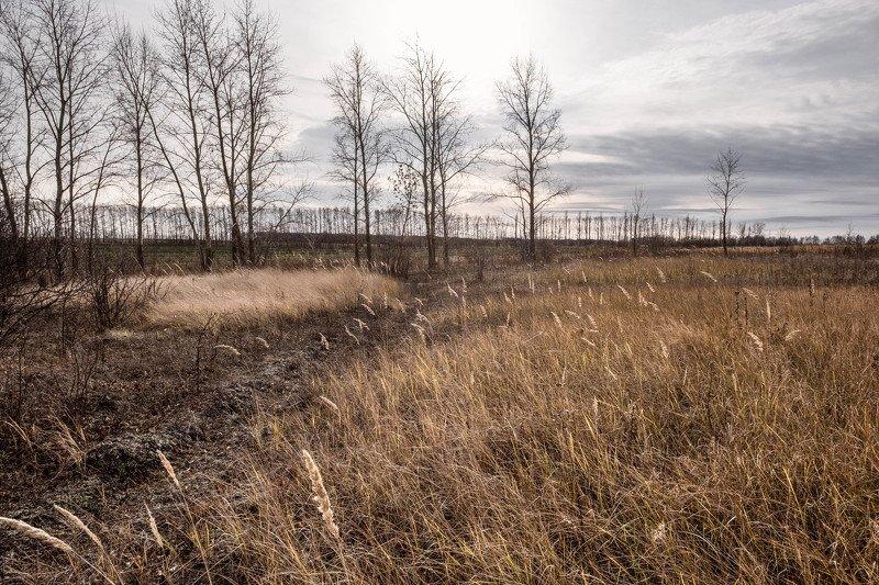 пейзаж, landscape, осень, autumn, поле, novamber, field Ноябрьphoto preview