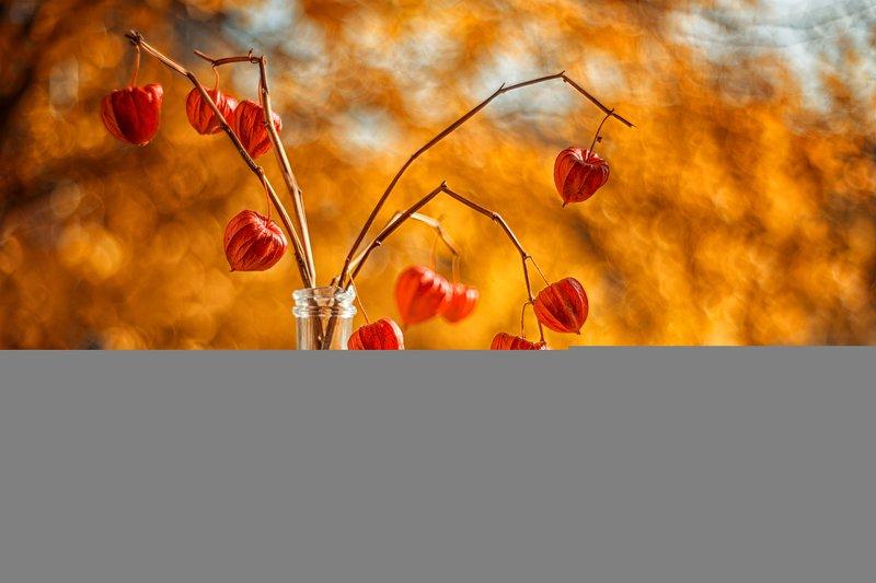осень листва боке физалис сухоцвет Золотая осень на моем окнеphoto preview