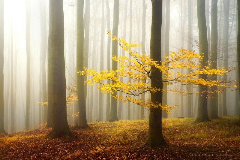 чехия осенний туманphoto preview