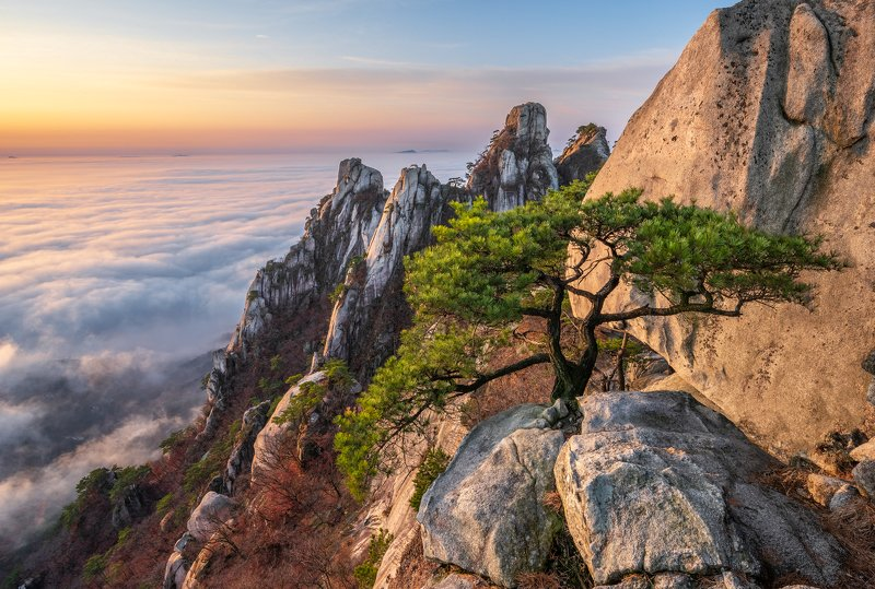 mountains,peak,hiking,fog,clouds,pine,autumn Other pine tree of Dobongsanphoto preview