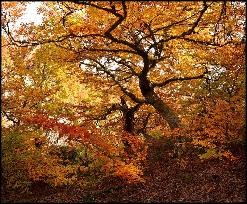 Осень золотая!photo preview