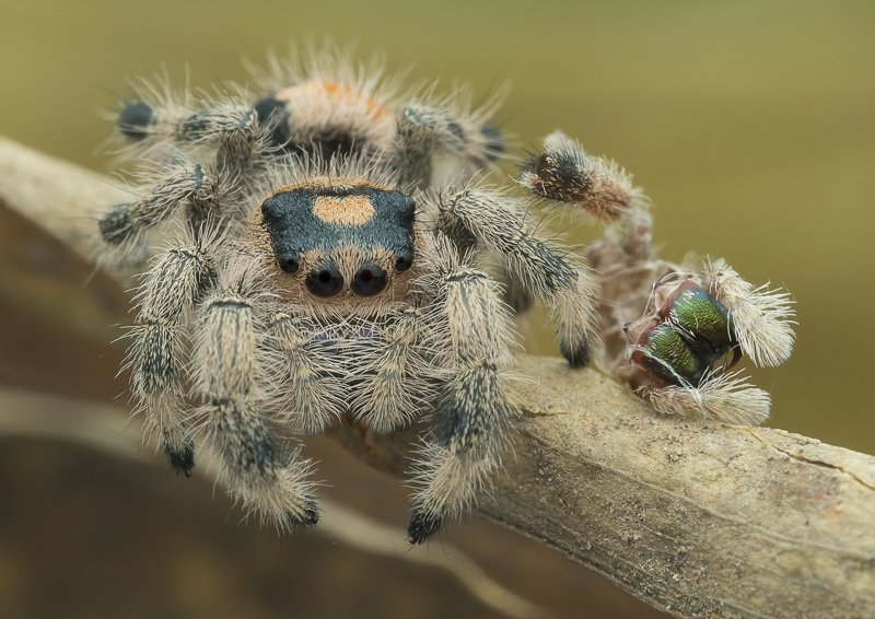 #spider#macro#colors#molted Spider With Molted Skinphoto preview