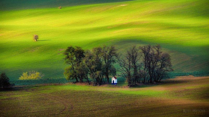 чехия, моравия, поля, czech, moravia, fields, sun, green В зеленых волнах Моравииphoto preview