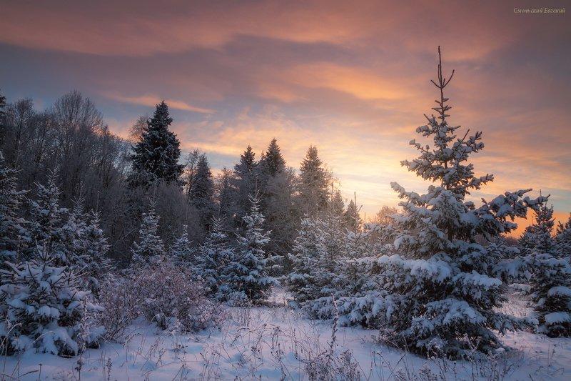 зима, лес, ель, снег, закат, вечер, мороз Морозный закатphoto preview