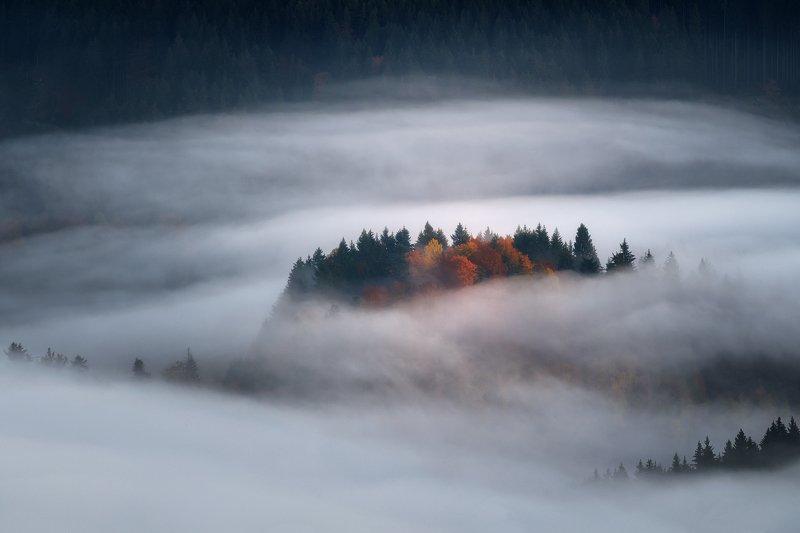 slovakia mood autumn forest island foggy landscape Islandphoto preview