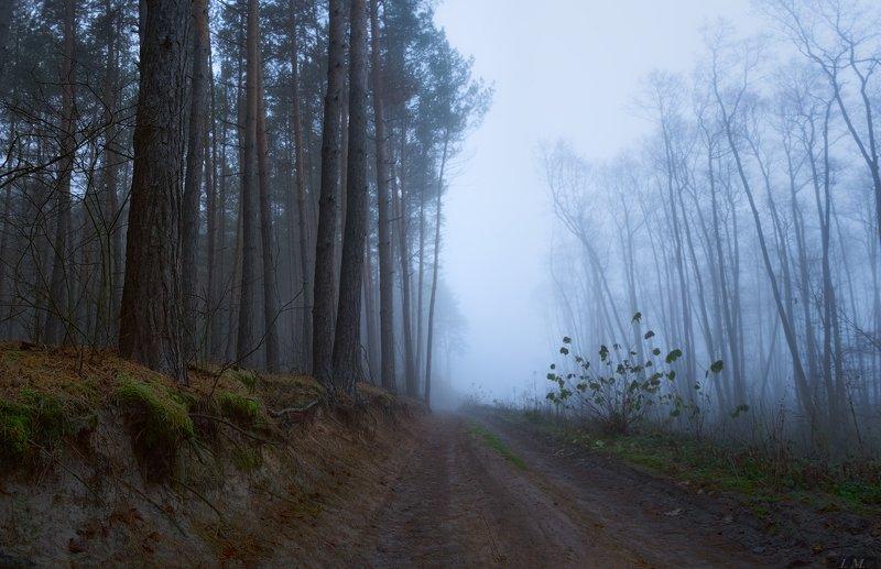 лес, туман, утро, осень, путь, дорога, пейзаж, сосны, misty, forest, way, road, foggy, landscape, fall, pine, trees, autumn, deep, panorama, fog, morning Misty wayphoto preview
