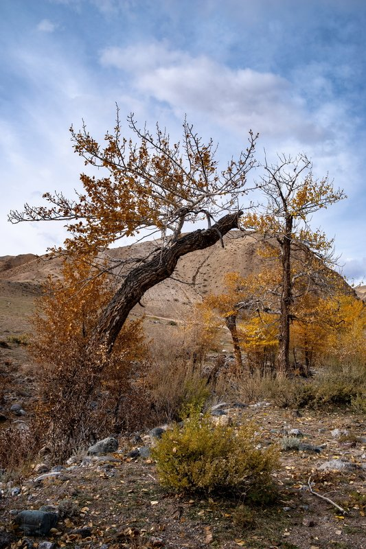 горы алтай горный марс кызыл-чин пейзаж природа россия ник васильев красота деревья лиственница Разговор.photo preview