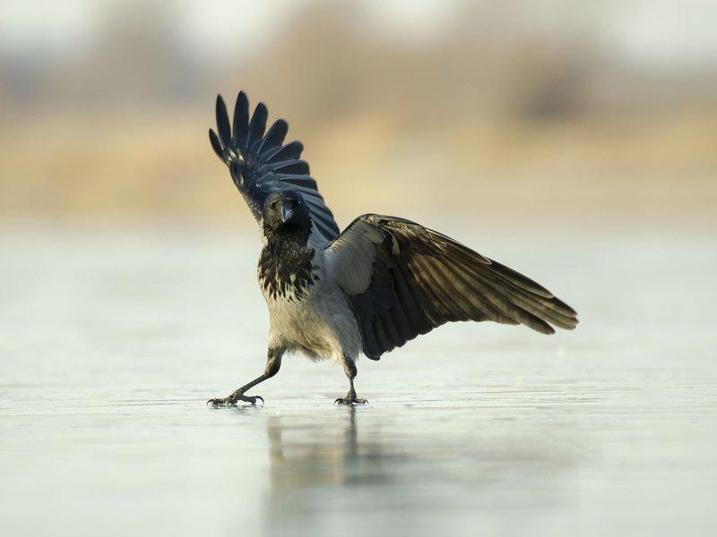птицы,природа, зима Кунг-Фуphoto preview