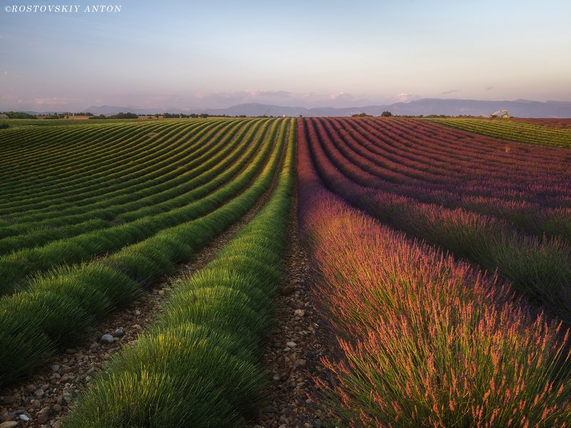 Provence, France, Lavender, уборка, Contrast of Provencephoto preview