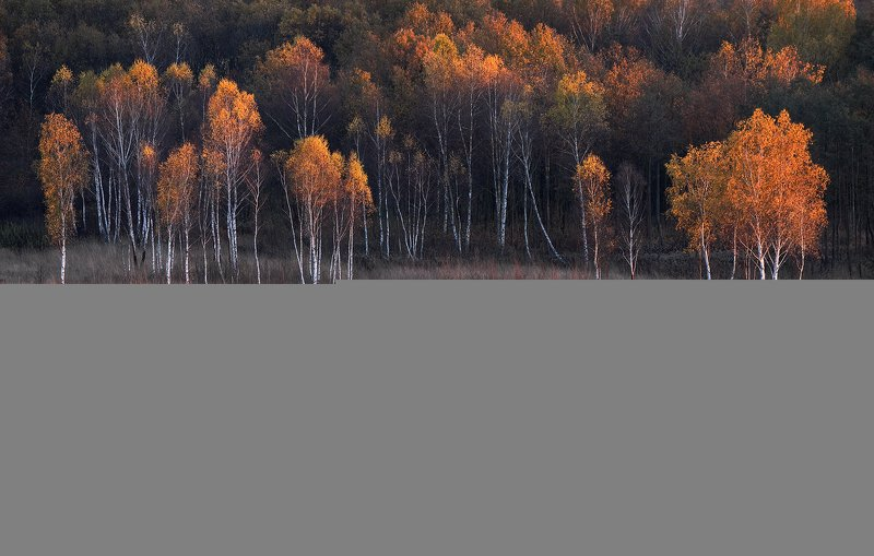 birch-tree, autumn, forest, sunset, light, Painted with lightphoto preview