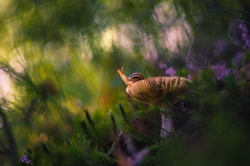 Таинство утреннего лесаphoto preview