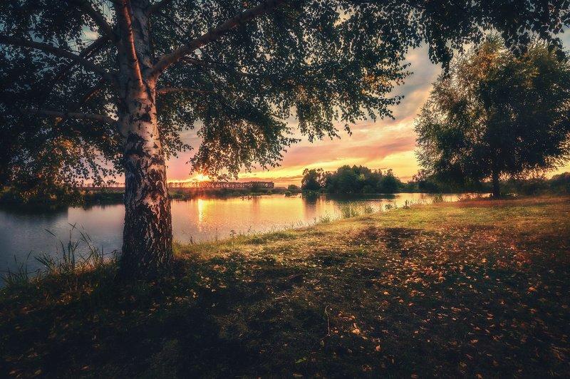 вечер, берёза ***photo preview