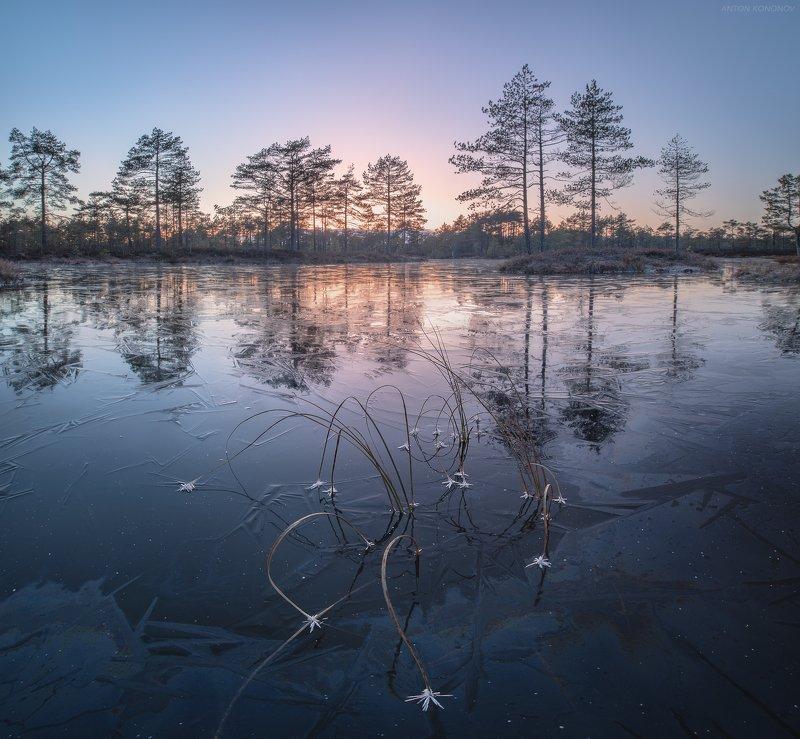 болото, лёд, сосны, закат Ледяные цветыphoto preview