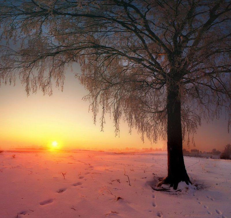 дерево, утро, снег, туман, зима, солнце, восход Следы к теплуphoto preview