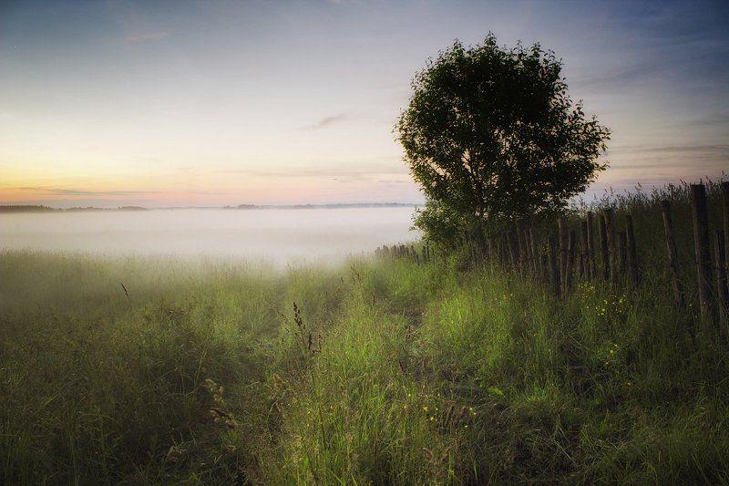 поле, туман, вечер, забор Мягкое полеphoto preview