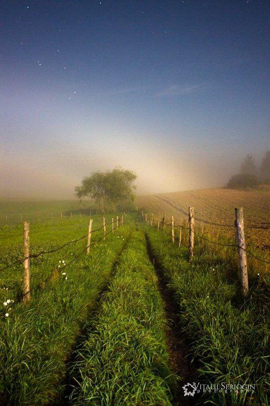 радуга, туман, ноч, луна, дерево, поле Лунная радугаphoto preview
