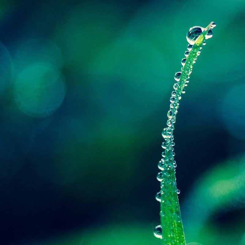 вода, капли, макро, роса, красота Свежесть утренней росыphoto preview
