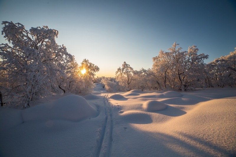 пейзаж, сугробы, снег, солнце, тропа, деревья, лес, природа, зима «Под пушистым пледом»photo preview