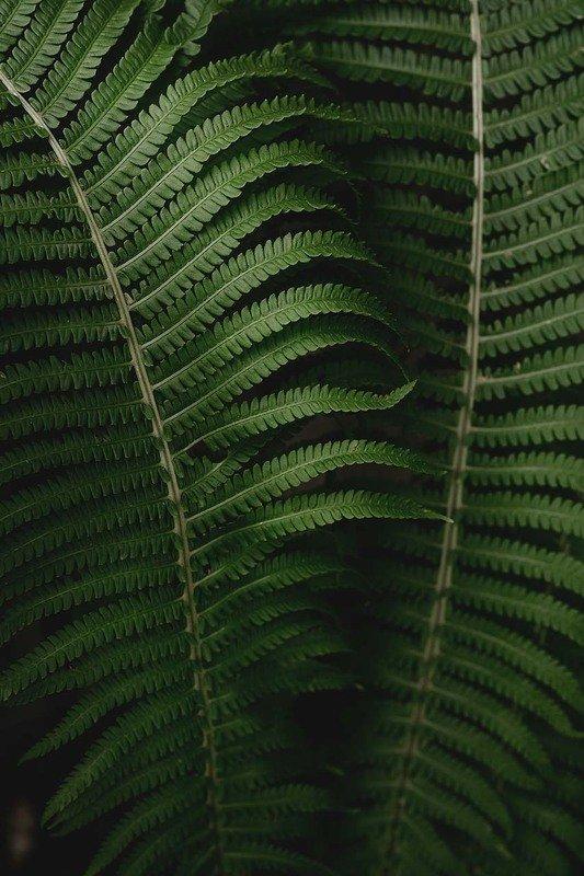 папоротник, природа, лес Папоротникиphoto preview