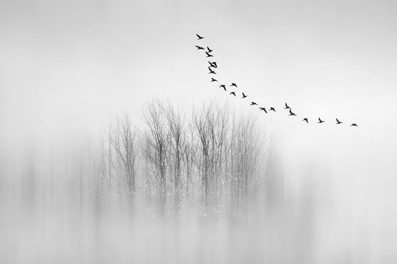 minimal, birds, black and white, trees, fog Departuresphoto preview