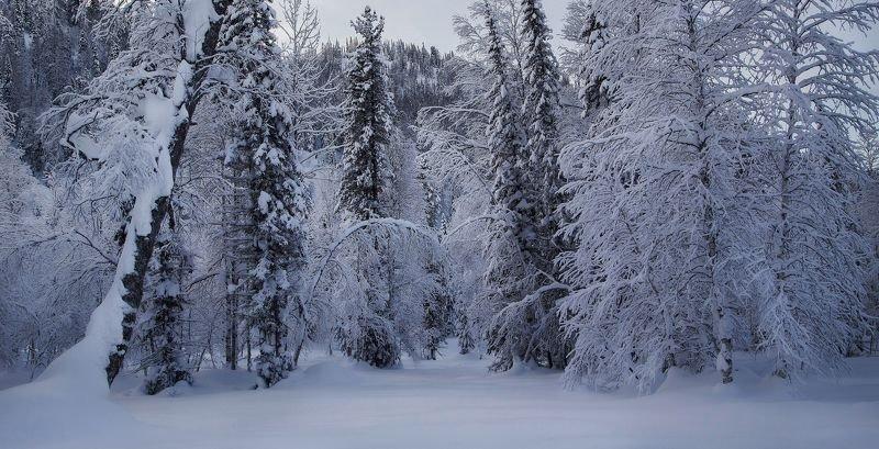 кузбасс, кузнецкий алатау, зима, мороз, сугробы, белый, лес, Нарядился лес, встречая зиму...photo preview
