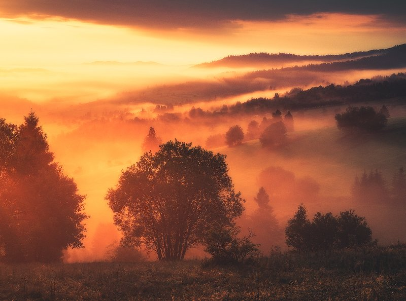 landscape, photogrpahy, love, nature, globalshotz,amazing,place,foggy,sunrise Foggy Sunrisephoto preview