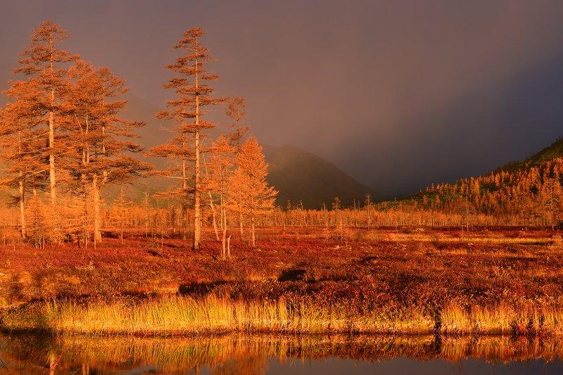 Местами рассветные дожди... photo preview
