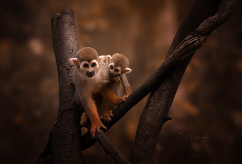 природа, животные, птицы, вьетнам, остров фукок С мамойphoto preview