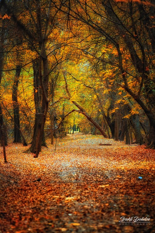 wood, forest, autumn, trees, leaf, leaves, yellow, landscape The end of Autumnphoto preview