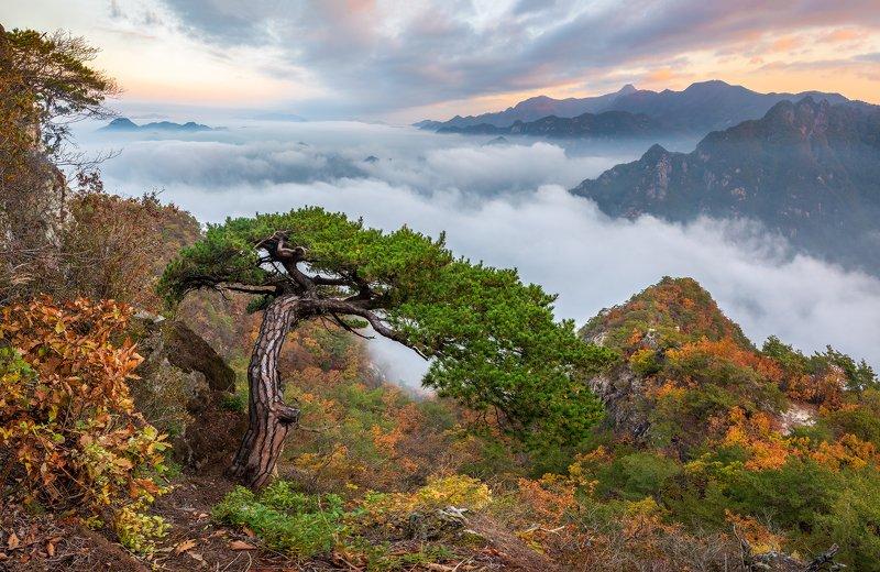 Natural bonsai of wolaksanphoto preview