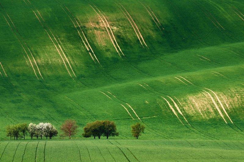 южная моравия, чехия, весна,  south moravia, czech Моравская веснаphoto preview