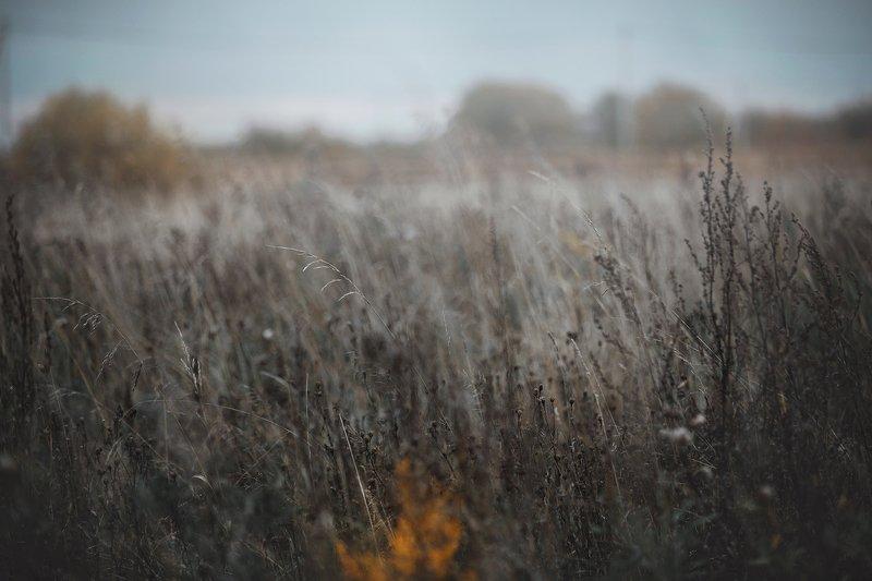 field, autumn, dry grass autumnphoto preview