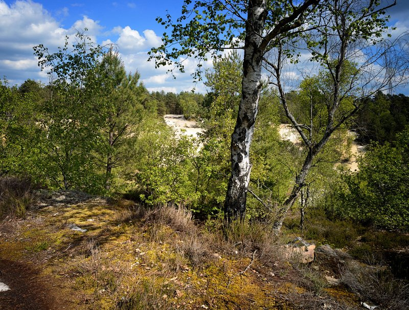 nemours, poligny, france, forêt photo preview
