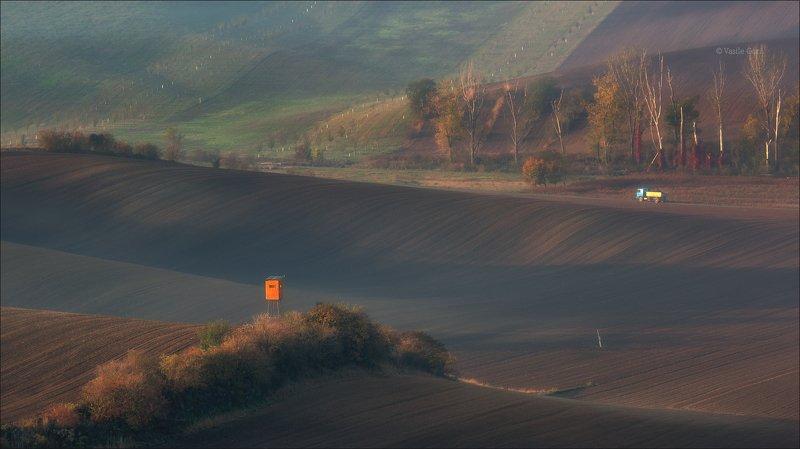 южная моравия,пейзаж,деревья,линии,south moravian,lines,свет,czech,осень,чехия,landscape \