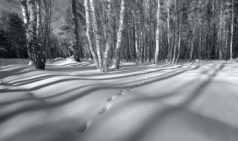 зима, снег, тени, деревья, берёзы, следы Мелодия зимыphoto preview