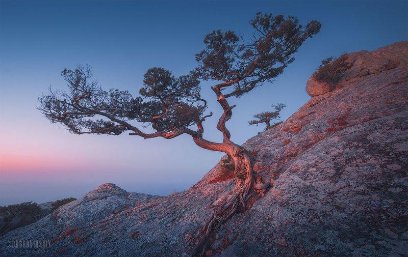 крым, новый свет, дерево, рассвет, скалы Танцы на камняхphoto preview