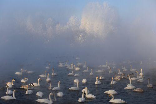 Утро уходит с туманом