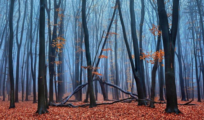 осень, туман, киев, украина ***photo preview