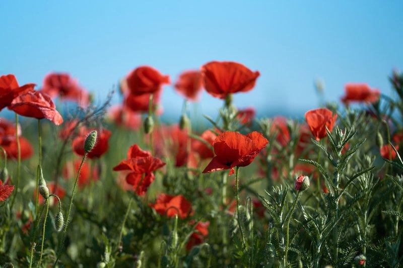 macro, nikon, nature,sigma, цветы, макро, боке Летний деньphoto preview