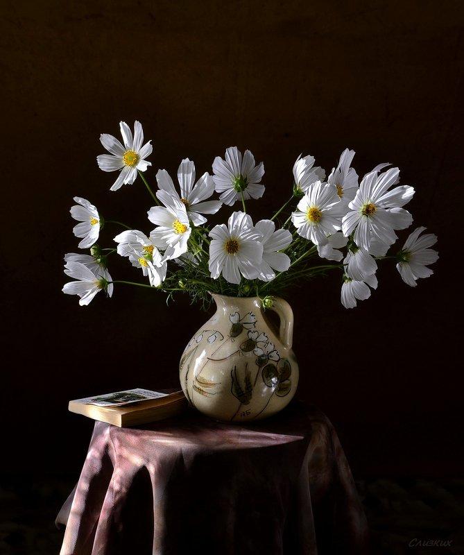 натюрморт,композиция,свет,лето,букет,космея,книга Белая космеяphoto preview