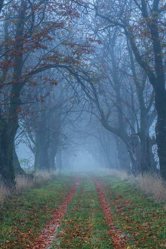 forest, rain, green, trees, autumn, fog, misty Chestnut alley in the fogphoto preview