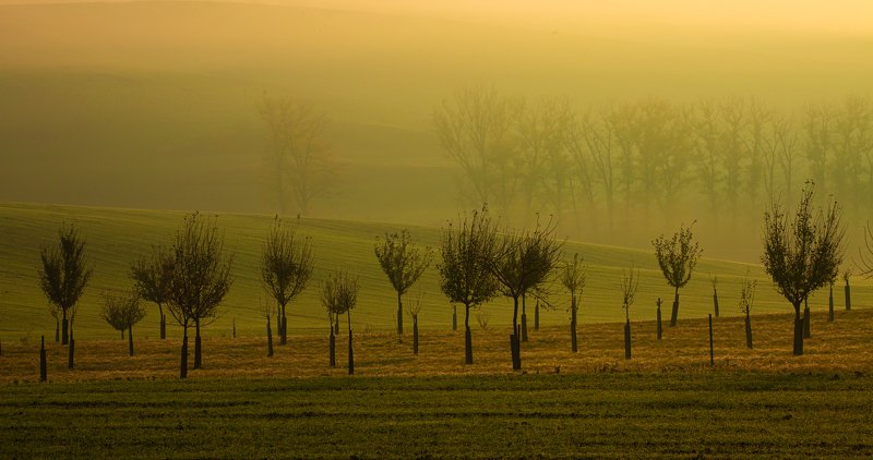 моравия туман Colored Fogs of Moraviaphoto preview