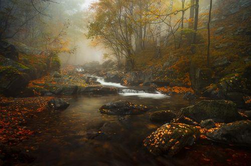 Autumn premonition / Осеннее предчувствие