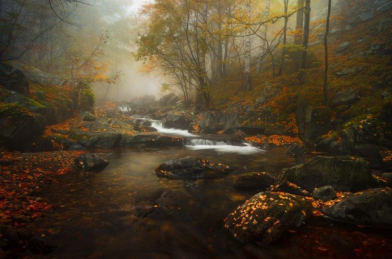 landscape, nature, scenery, forest, wood, , autumn, mist, misty, fog, foggy, rriver, mountain, staraplanina, bulgaria, туман, лес Autumn premonition / Осеннее предчувствиеphoto preview
