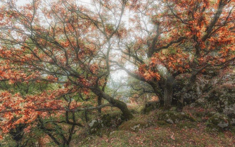 Осенний ажур...photo preview