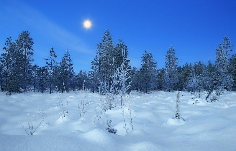 зима снег утро рассвет photo preview