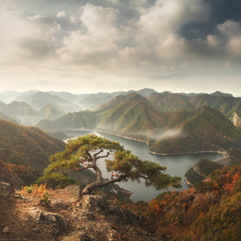 Корейские сосныphoto preview