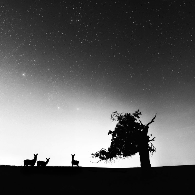 deer, tree, stairs, summer, Three deer and one treephoto preview